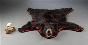 Hovedmonteret sortbjørn samt kranie 2