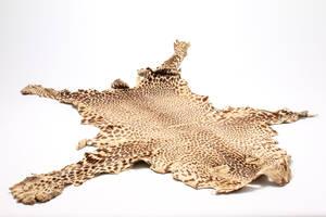 Leopard skind